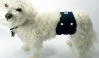 Best Washable Dog Diapers